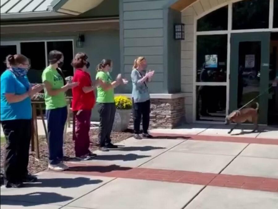 festa per cane adottato