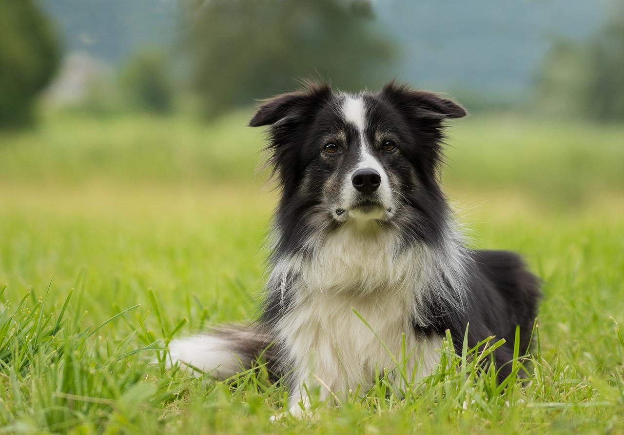 cane seduto nell'erba