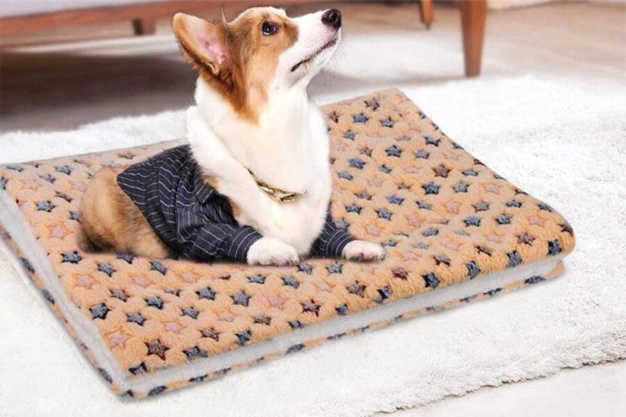 cane su tappeto morbido