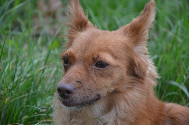 cucciolo meticcio marrone
