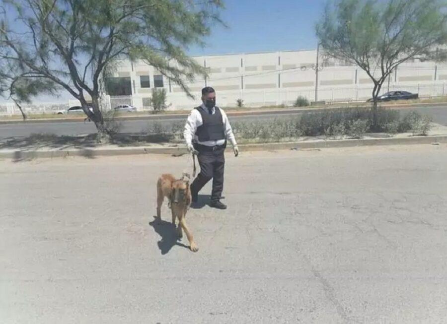 cucciolo di cane abbandonato legato ad un albero
