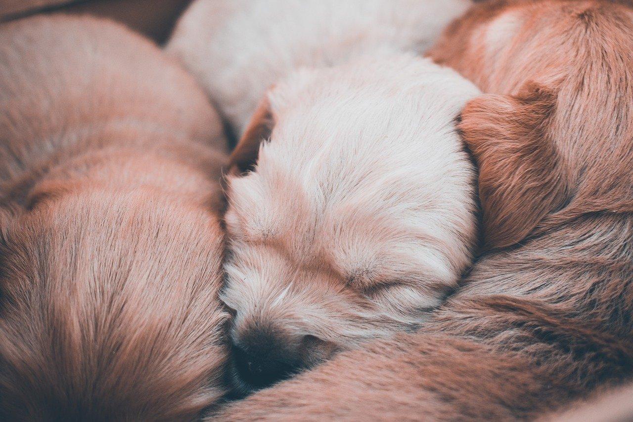 cane appena nati dormono
