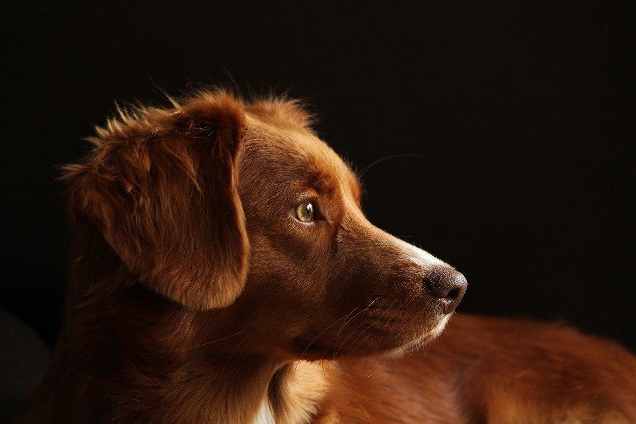 cane concentratissimo