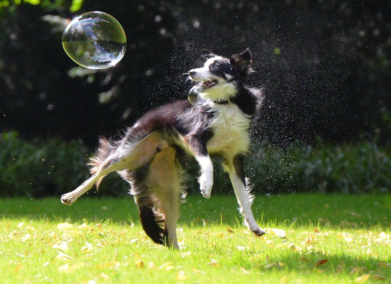 cane e bolla di sapone