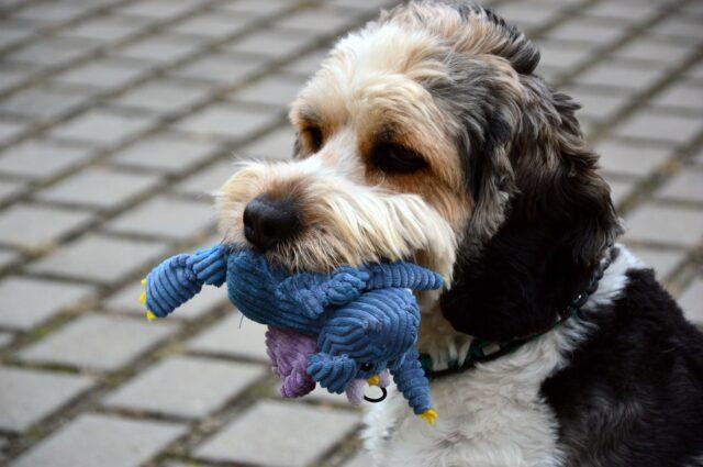 cane con pupazzo in bocca
