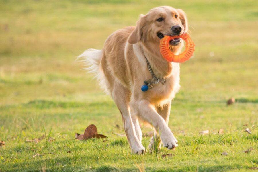 cane e anello di gomma fra i denti