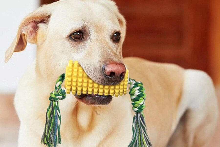pannocchia di gomma per cani