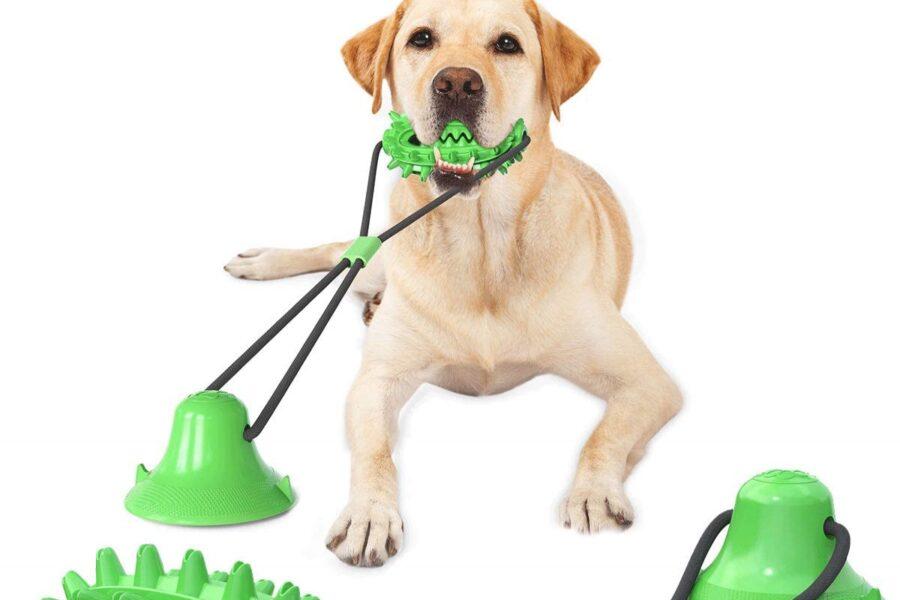 gioco con ventosa per cane