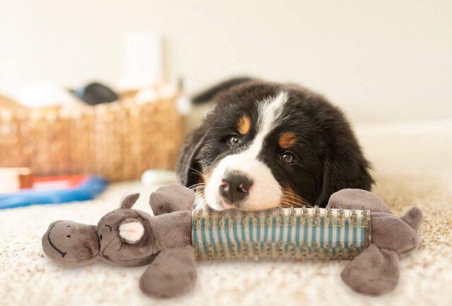 cane con il suo giocattolo preferito