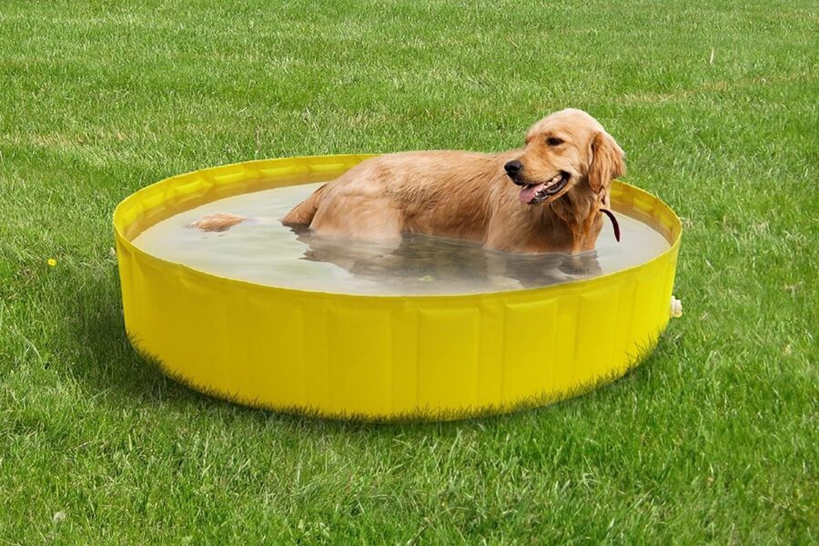 piscina per il bagno del cane