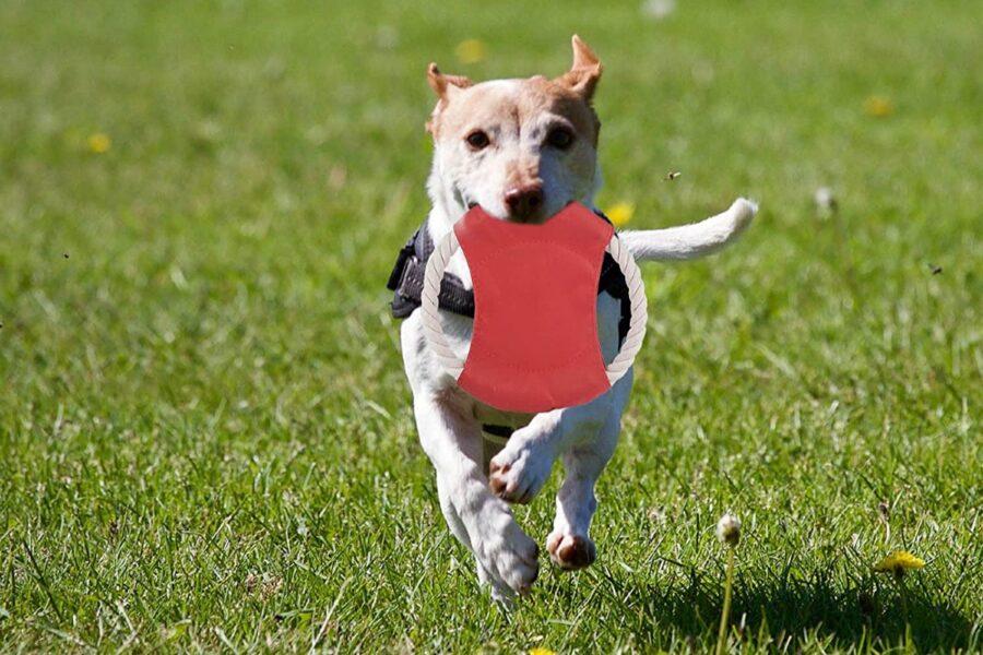 cane corre con frisbee