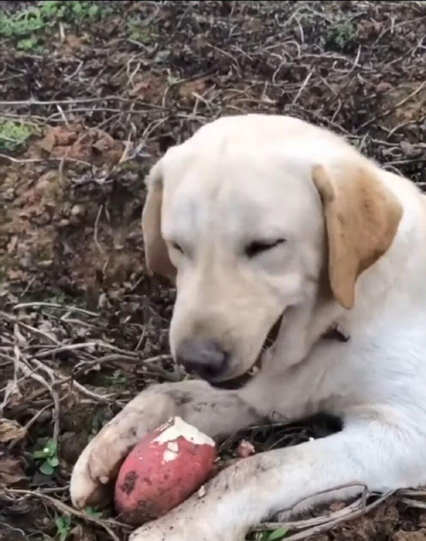 goloso cane mangia ortaggi