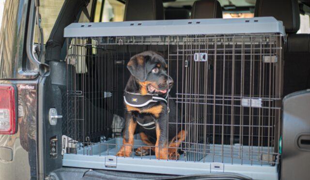 cucciolo di cane nel kennel