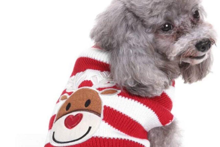 cane pronto per il natale