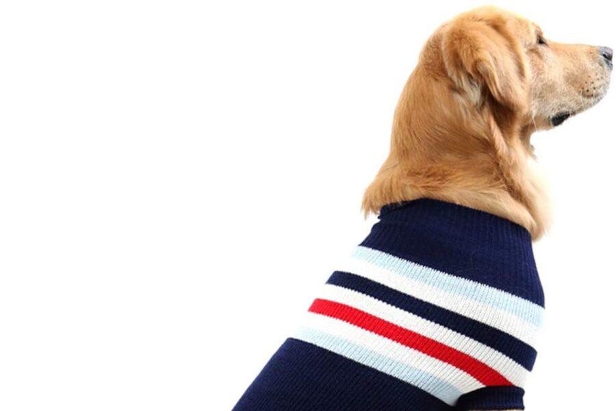 maglione a righe per cani
