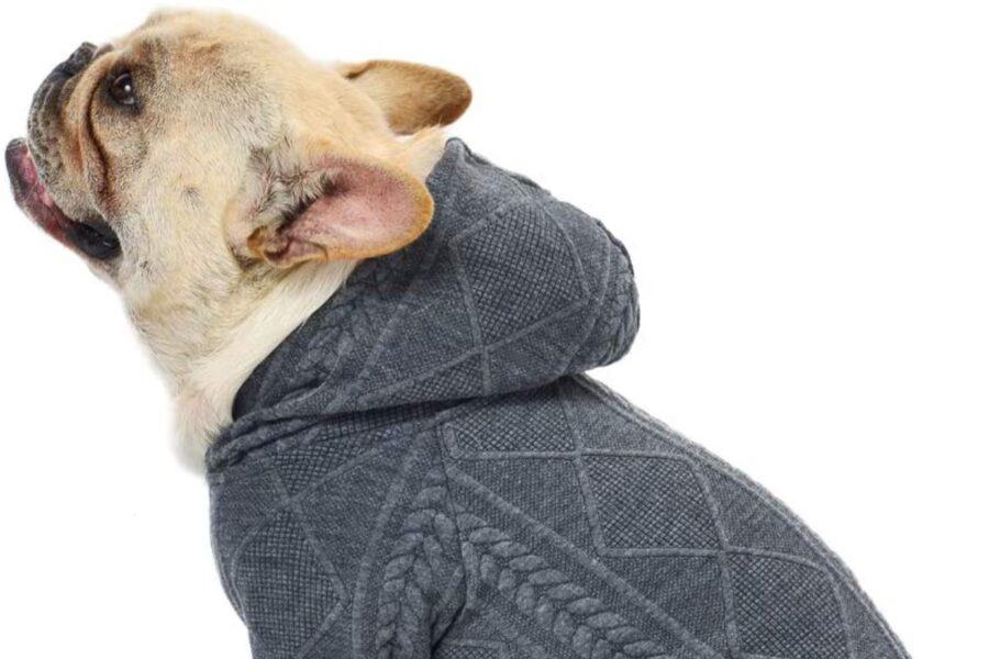 maglia con cappuccio per cane