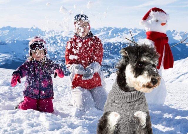 cane sulla neve con famiglia