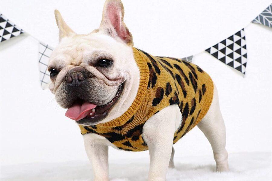 cane alla moda
