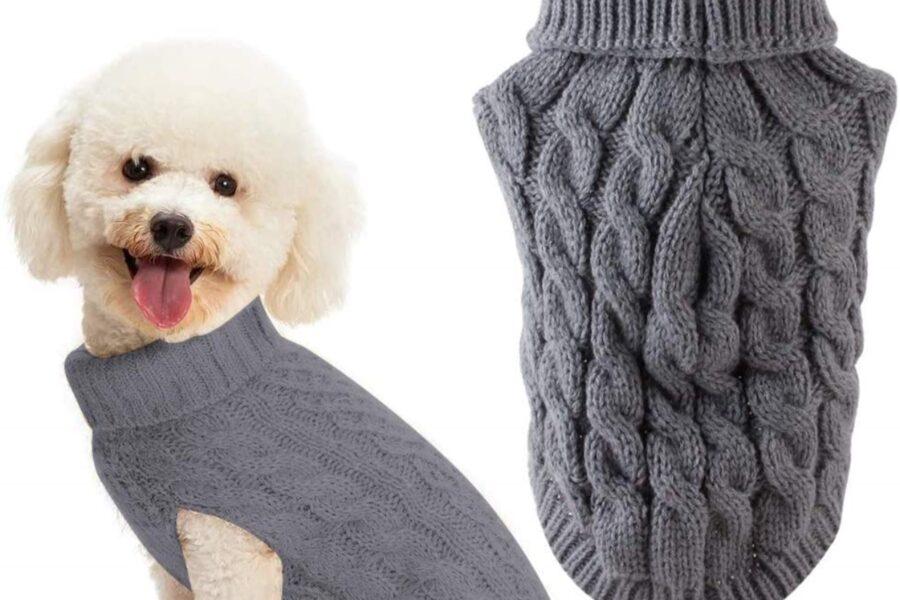 cane barboncino con maglione
