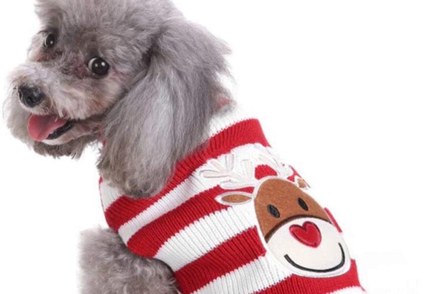 maglione con renna per cane