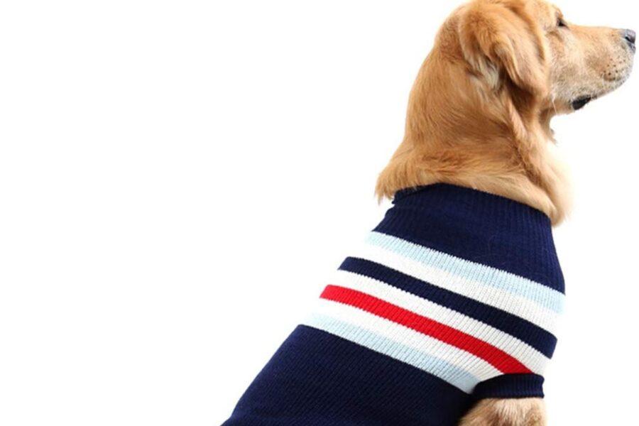 cane con maglione a righe