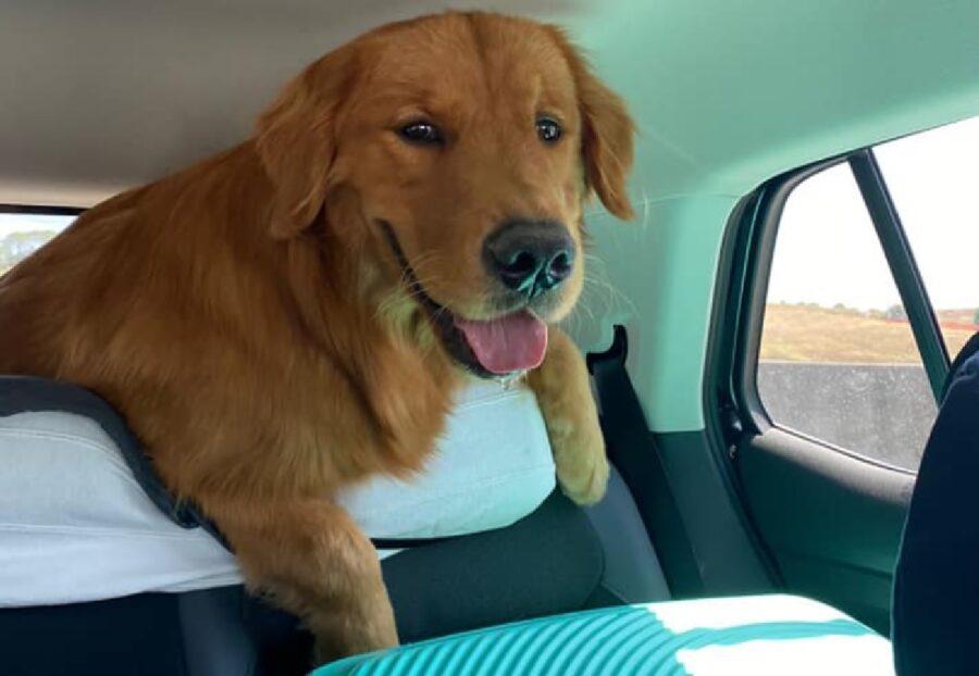 cane in auto portabagagli
