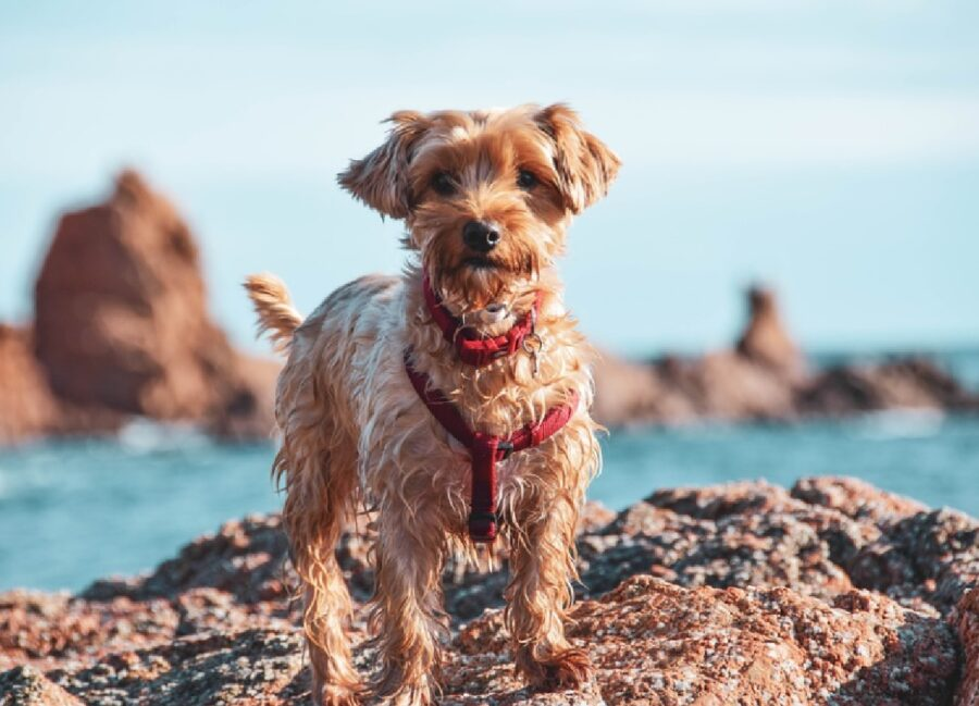 cane su una roccia