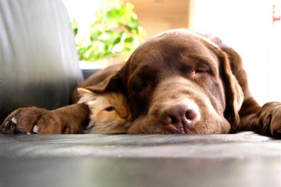 cane e gattino sul divano