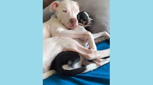 cane abbraccia un altro cane