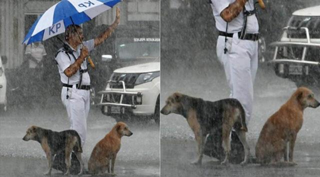 agente ripara cani dalla pioggia