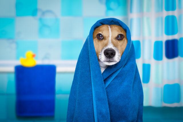 cane avvolto in un asciugamano