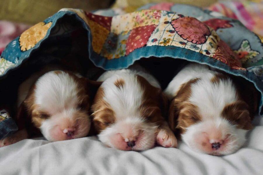 cuccioli di cane appena nati