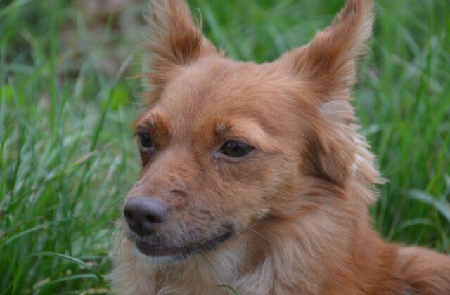 proseguono ricerche per cagnolino charlie