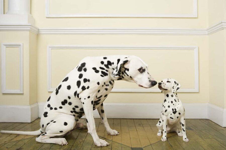 mamma e cucciolo di cane si odorano