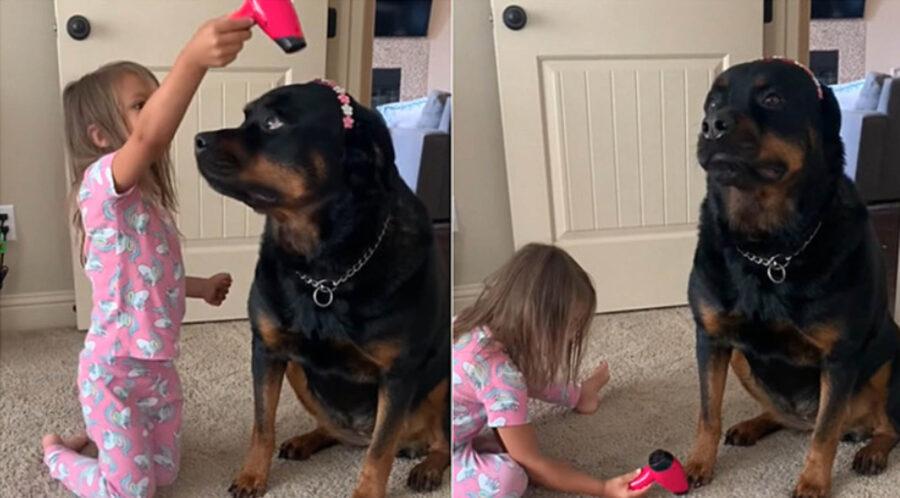 bambina gioca con rottweiler