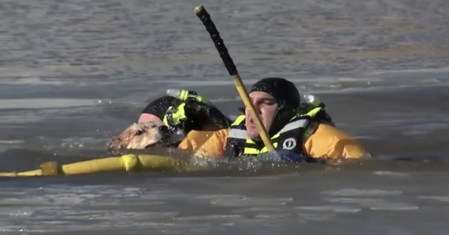 marinai salvano un cane in acqua