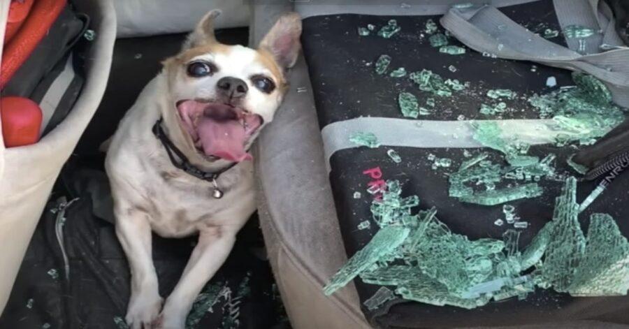 cane chiuso in una vettura salvato da un poliziotto