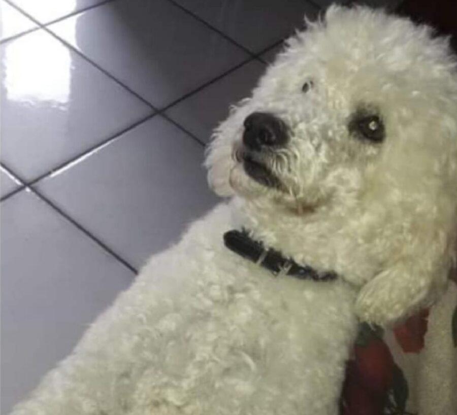 cagnolino Pino aspetta coccole