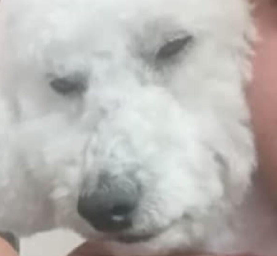cane pino occhi socchiusi