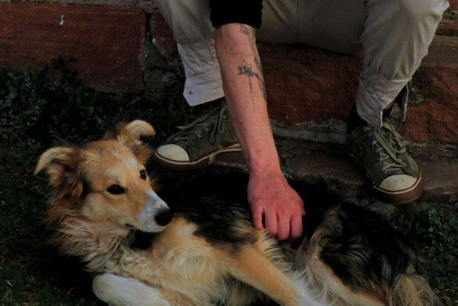 cane e carezze