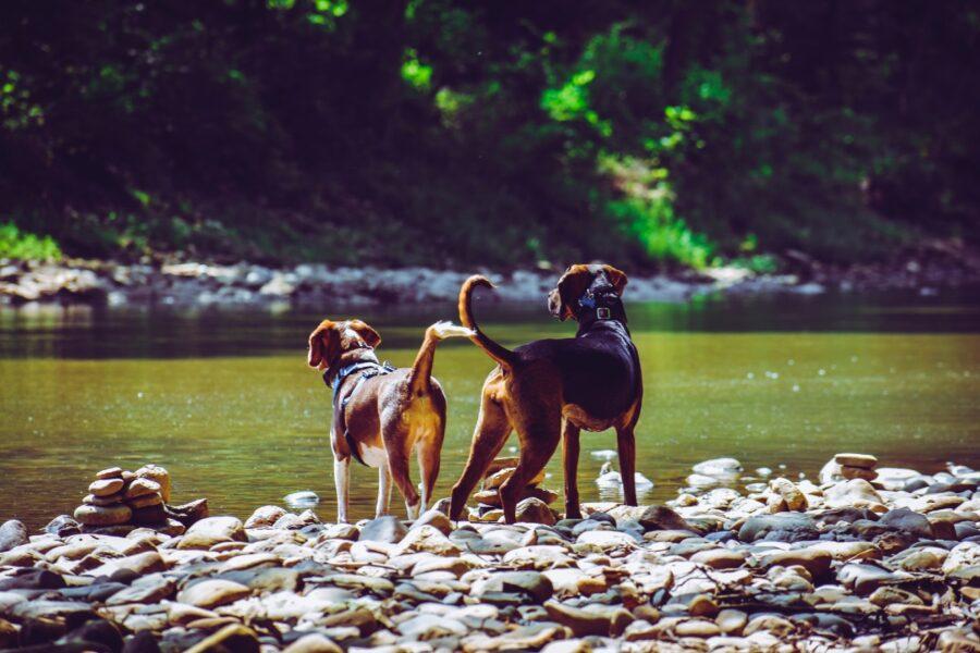 cani al lago