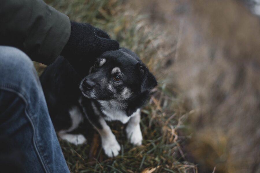 cucciolo di cane intimorito