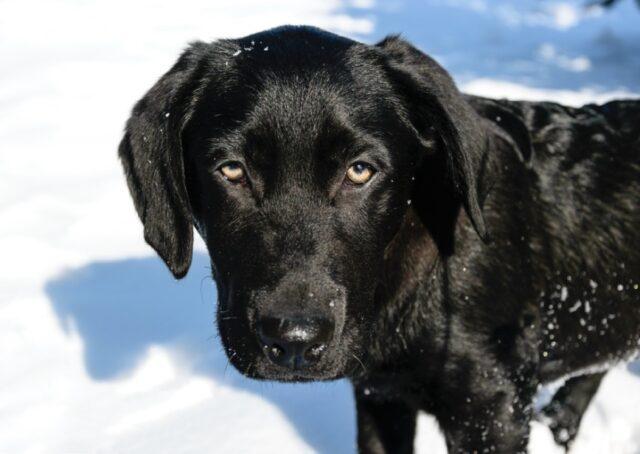 proprietari forniscono ricompensa per ritrovamento cane