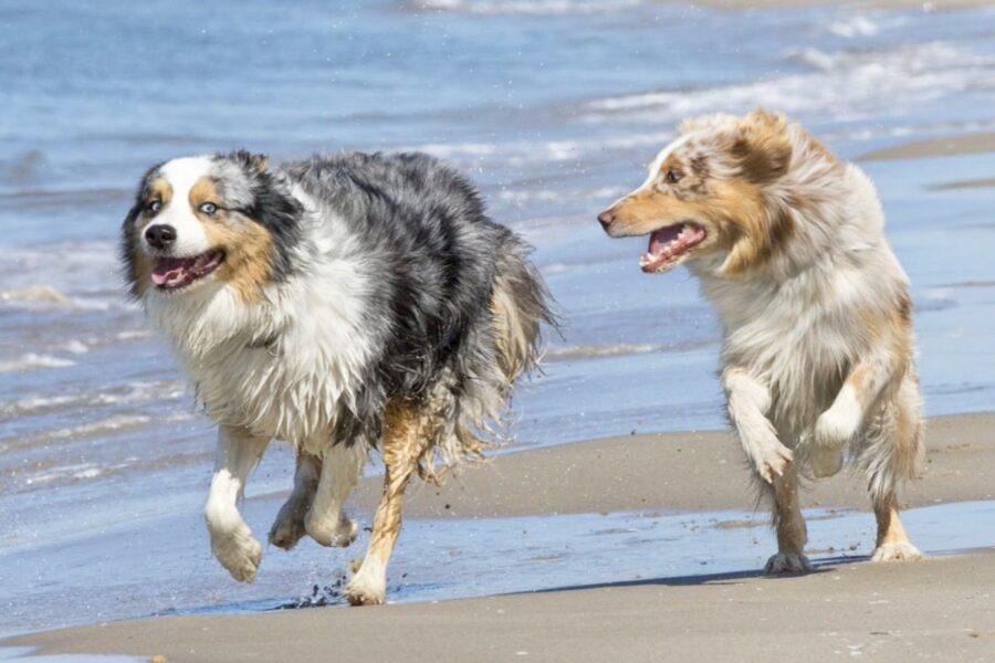 cani corrono al mare