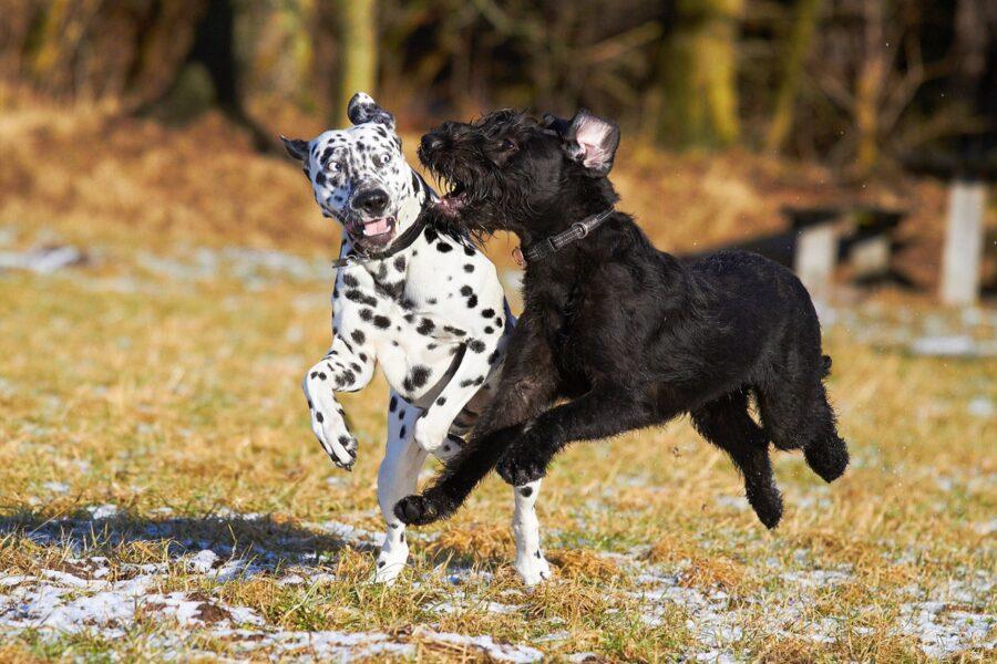 cani che si conoscono
