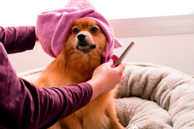 cane al lavaggio