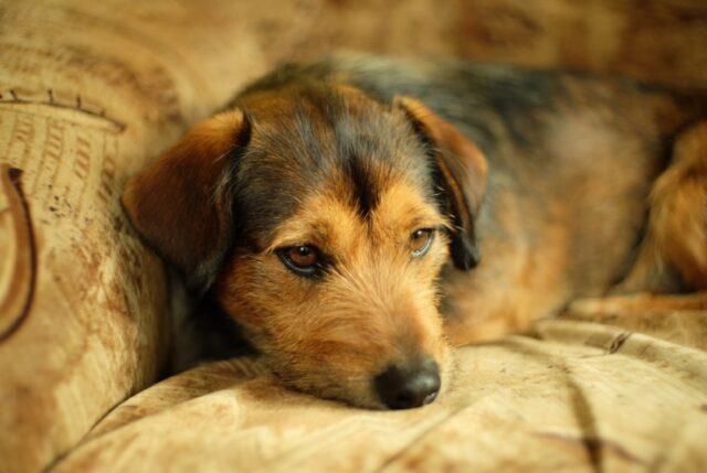 scompare prima di essere adottata cagnolina