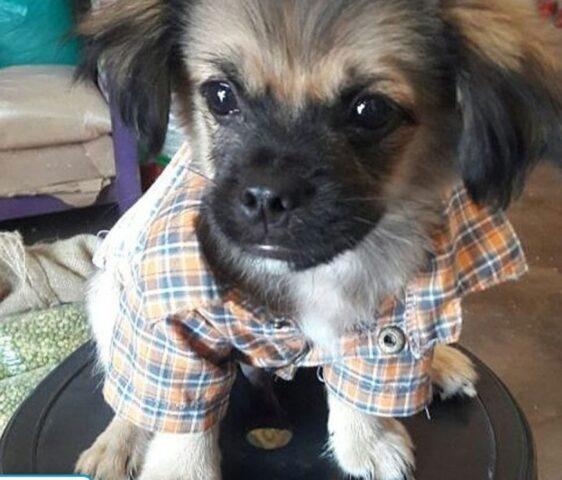 cucciolo di cane fa gli occhi dolci
