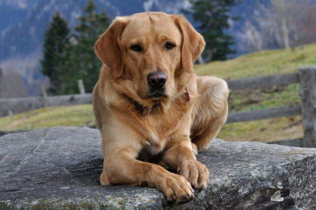 cane zampe stupendo