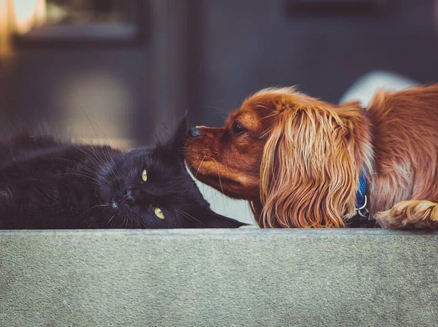 micio nero amicizia